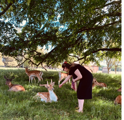 park with deers