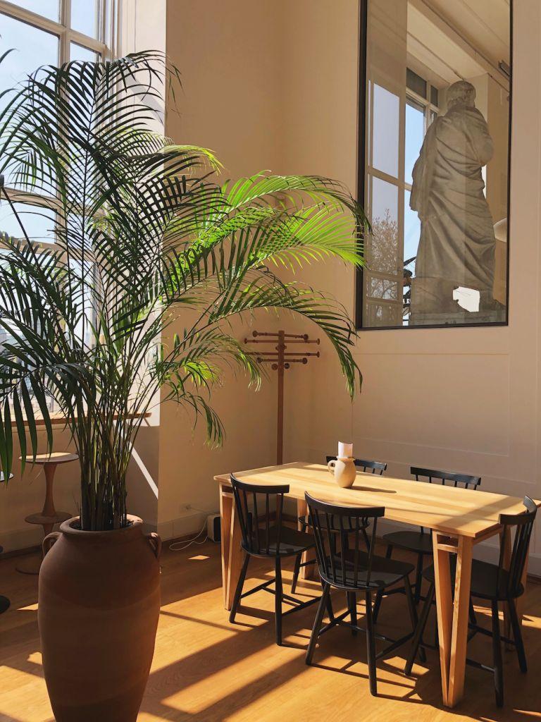 inside a cafe with a palm